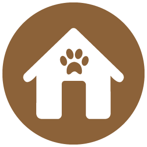 care advice icon